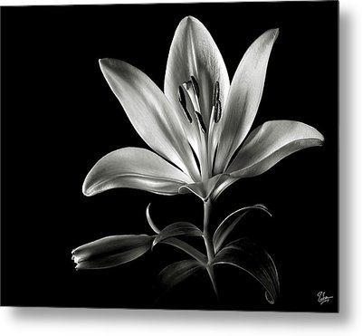 Tiger Lily In Black And White Metal Print by Endre Balogh