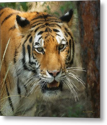 Tiger Painterly Square Format  Metal Print by Ernie Echols