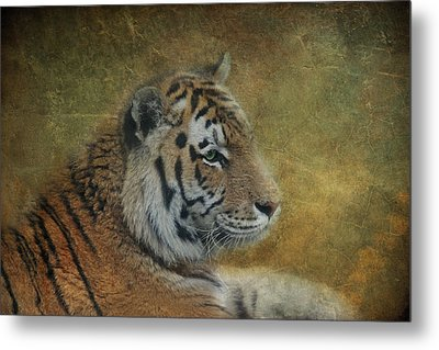 Tigerlily Metal Print by Claudia Moeckel