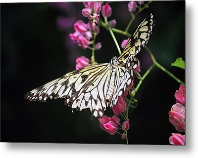 Metal Print featuring the photograph Tilted Pink by Amee Cave