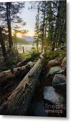 Timber Metal Print by Tyler Porter