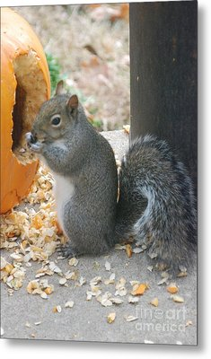 Metal Print featuring the photograph Time To Eat by Mark McReynolds