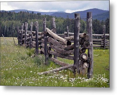 Timeless  Metal Print by Juls Adams