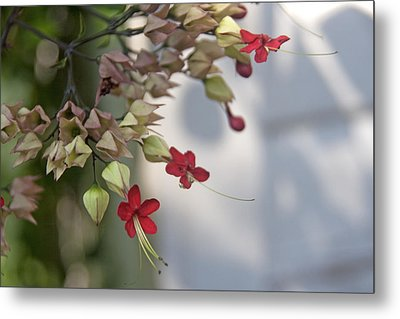 Metal Print featuring the photograph Tiny Flowers by Lou Belcher
