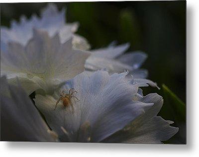 Tiny Spider On White Flower Metal Print by Scott McGuire