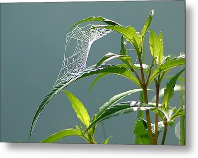 Tiny Web Metal Print by Peg Toliver