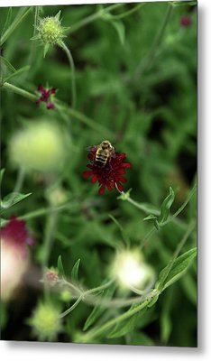 Metal Print featuring the photograph To Bee by Lorraine Devon Wilke