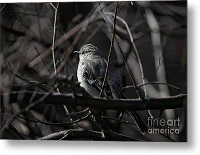 To Kill A Mockingbird Metal Print by Lois Bryan