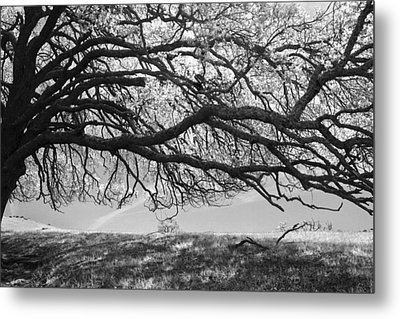To Lie Here With You Would Be Heaven Metal Print by Laurie Search