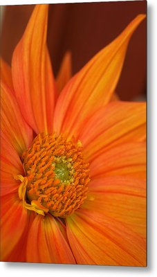 To The Point Metal Print by Kathy Yates