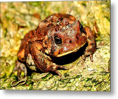 Metal Print featuring the photograph Toad by Joe  Ng