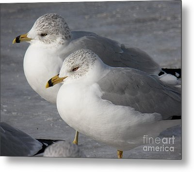 Togetherness Metal Print by Judy Via-Wolff