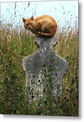 Tombstone Cat Metal Print by Still Watters