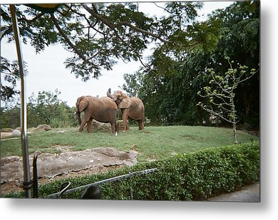 Too Close For Comfort Metal Print by Val Oconnor