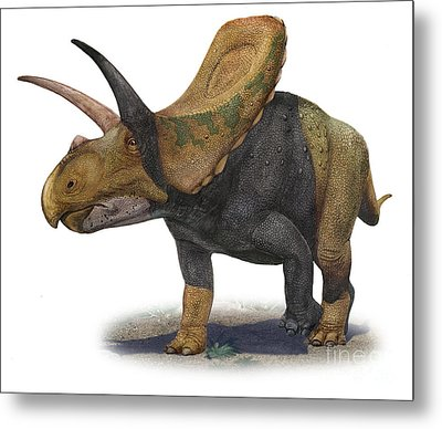 Torosaurus Latus, A Prehistoric Era Metal Print by Sergey Krasovskiy