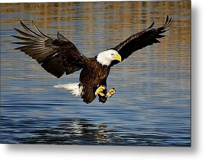 Touch Down Metal Print by Paulette Thomas