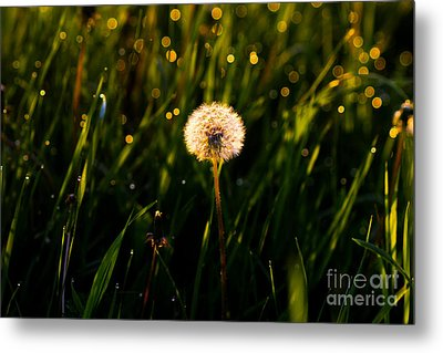 Metal Print featuring the photograph Touch Of Nature by Everett Houser