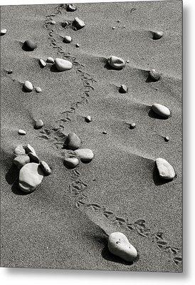 Tracks And Rocks Metal Print by Brady D Hebert