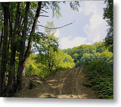 Tracks In The Forest Metal Print by Bogdan M Nicolae