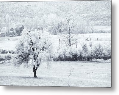 Tracks In The Frost Metal Print by Mike  Dawson