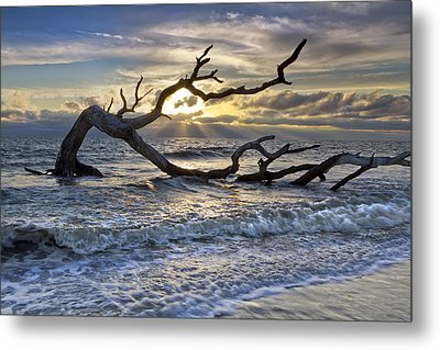 Treasures Of The Sea Metal Print by Debra and Dave Vanderlaan