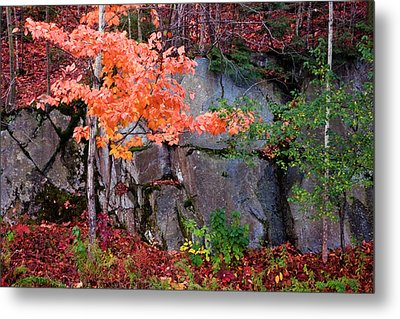 Tree And Rock Metal Print