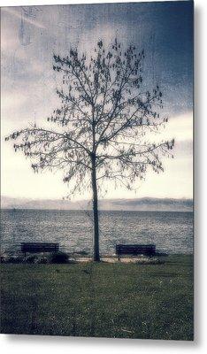 tree at lake Constance Metal Print by Joana Kruse