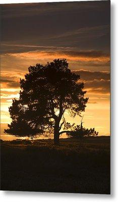 Tree At Sunset, North Yorkshire, England Metal Print by John Short