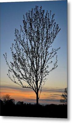 Tree At Sunset Metal Print by Wayne King