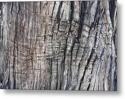 Tree Bark No. 1 Stress Lines Metal Print by Lynn Palmer