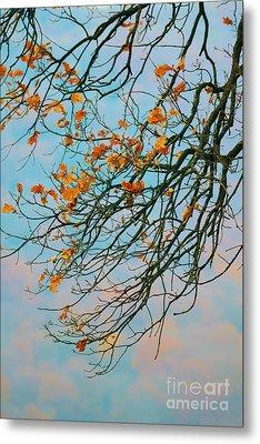 Tree Branches In Autumn Metal Print by Gabriela Insuratelu