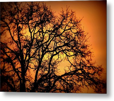 Tree Bursting With Setting Sun Metal Print by Cindy Wright