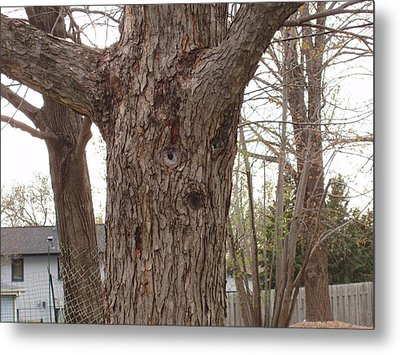Tree Face Metal Print by Lori  Theim-Busch