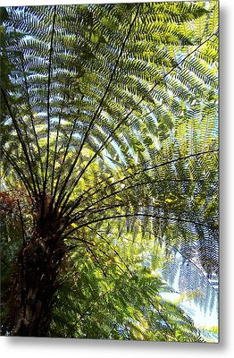 Metal Print featuring the photograph Tree Fern by Peter Mooyman