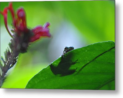 Metal Print featuring the photograph Tree Frog Peeking Over Leaf by Jodi Terracina