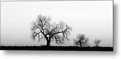 Tree Harmony Black And White Metal Print by James BO  Insogna