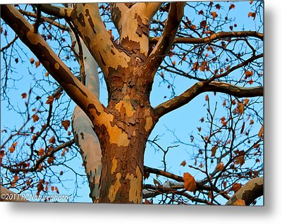 Metal Print featuring the photograph Tree In Camo by Rachel Cohen