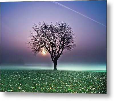 Tree In Field Metal Print by Ulrich Mueller