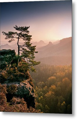Tree In Morning Llght In Saxon Switzerland Metal Print
