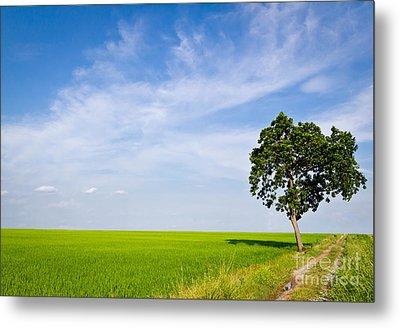 Tree In Paddy Field Metal Print