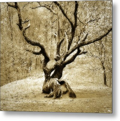 Tree In The Forest Metal Print by Susan Leggett