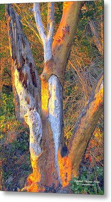 Tree In The Sunset Metal Print by Randall Thomas Stone