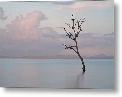 Tree In Water Metal Print by Flash Parker