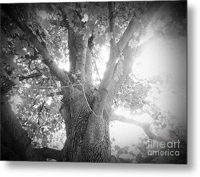 Tree Metal Print by Jeremy Wells