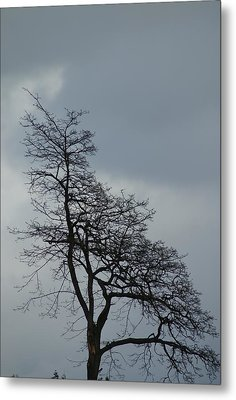 Metal Print featuring the photograph Tree by Jerry Cahill