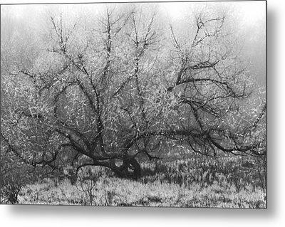 Tree Of Enchantment Metal Print by Debra and Dave Vanderlaan