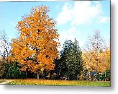 Metal Print featuring the photograph Tree Of Gold by Joe  Ng