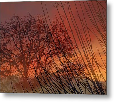 Tree Of Life Sunset Metal Print by Cindy Wright