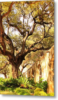 Tree Over Alamo Gardens II Metal Print
