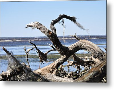 Tree Parts Metal Print by Tiffney Heaning